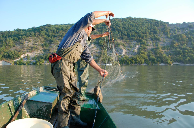 Javni poziv za selektivni izlov tolstolobika u Porečkom zalivu u 2020. godini